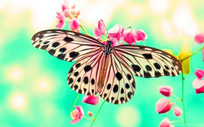 Ascension News: 2018, The Year of the Butterfly.